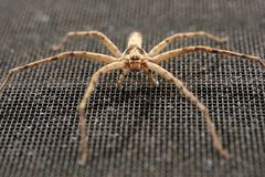 Closeup Spider Royalty Free Stock Images