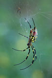 Closeup of spider Royalty Free Stock Image