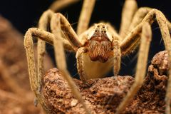 Closeup of spider in its natural environment Royalty Free Stock Photos