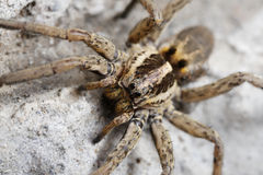 Closeup of a Spider Stock Photo