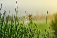 Closeup of spider web on grass with dew drops on it Stock Photography