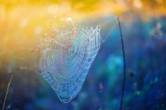 Closeup spider web in a water drops at the  morning Stock Images