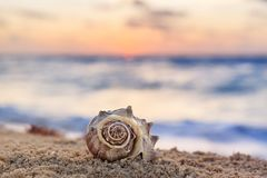 Closeup of Spiral Shell on a Tropical Sandy Beach with Sunrise o. Ver Ocean as a background in Mexico, Cancun, selective focus, vacation concept royalty free stock image