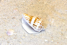 Closeup of spiral shell on warm tropical beach. Vacation desitination Stock Photography