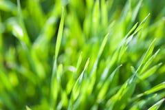 Closeup of spring green grass Stock Photo