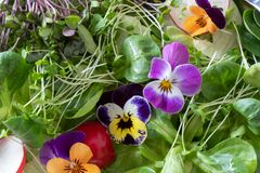 Closeup of a salad with edible flowers and fresh broccoli and kale microgreens royalty free stock photography