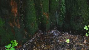 Closeup of spring water as it falls and dribbles on green moss stock footage
