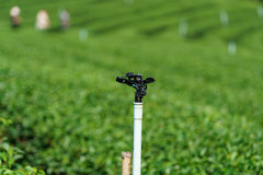 Closeup Sprinkler in green tea plantation is system watering Royalty Free Stock Photography