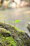 Closeup of sprout Stock Photos