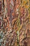 Closeup of Spruce Bark Stock Photography