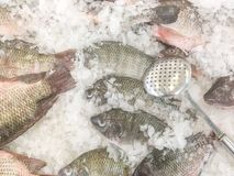 Closeup stainless sieve on pile of raw freeze dead fish for cook. In tray with ice textured background with copy space Stock Image