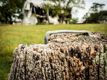 Closeup of Staple in Top of Wood Post. Heavy-duty metal staple in top of weathered wood post with blurred barn in background Stock Photo