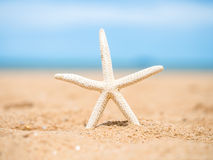 Closeup starfish on the beach background blue sky. Stock Images