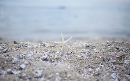 Closeup starfish on the beach Royalty Free Stock Photo