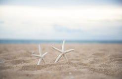 Closeup starfish on the beach Royalty Free Stock Image