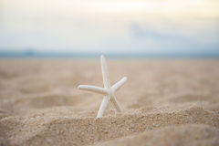 Closeup starfish on the beach Stock Photos