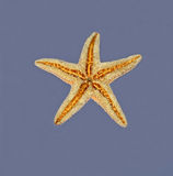 Starfish on wet surface Stock Photography