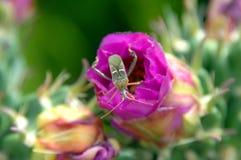 Closeup of Stink Bug Stock Image