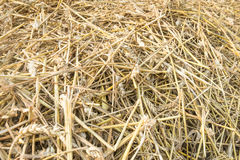 Closeup of straw after harvesting wheat Royalty Free Stock Photography