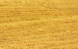 Closeup of straw texture Royalty Free Stock Photos