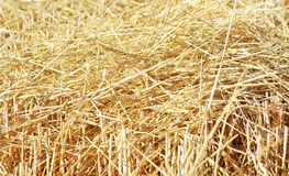 Closeup of straw texture Royalty Free Stock Image