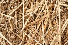 Closeup of straw texture surface. Straw textured surface for backgrounds and backdrops stock image