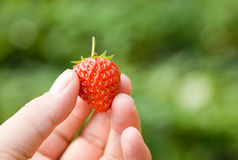 Closeup of strawberry Royalty Free Stock Photography