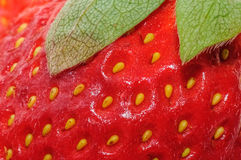 Closeup of strawberry surface Royalty Free Stock Photography