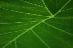 Closeup of the structures of a green leaf royalty free stock image