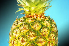Closeup pineapple on blue Stock Photography