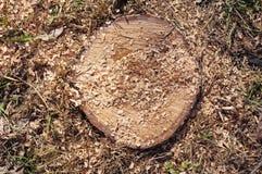 Closeup of stump Royalty Free Stock Image