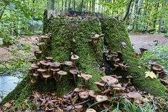 Stump of Tree with Fungus Stock Images
