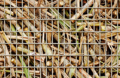 Closeup of sugar cane harvest. Closeup image of freshly harvested sugar cane on a cane train bin on the way to the sugar mill Royalty Free Stock Photography