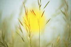 Closeup sun at sunrise between herbs, new day beging concept. stock photography