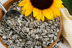 Closeup of Sunflower Seeds Stock Image