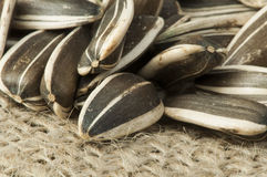 Closeup sunflower seeds on burlap Royalty Free Stock Image