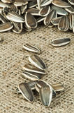 Closeup sunflower seeds on burlap Royalty Free Stock Images