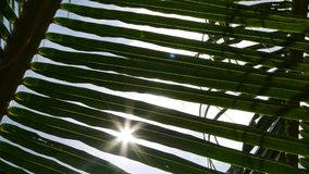 Sunlight through the leaves of palm trees at tropical. Closeup Sunlight through the leaves of palm trees at tropical stock video