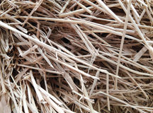 Closeup of sunlit dry straw haystack Royalty Free Stock Photo