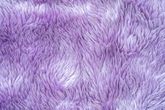 Closeup surface abstract fabric pattern at the purple fabric carpet at the floor of house texture background Royalty Free Stock Image