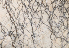 Closeup surface of big rock for decoration in the garden texture background Stock Photos