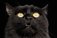 Closeup Surprised Black Cat Face with Yellow Eyes opening Mouth. On Dark Background Royalty Free Stock Images