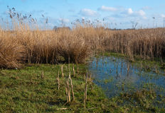 Closeup of a swampy area. Stock Photo
