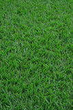 Closeup sward grass background Royalty Free Stock Photography