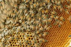 Closeup swarm of honeycomb on tree. Stock Photo