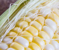 Closeup of sweet corn which have two tone. Color Royalty Free Stock Images