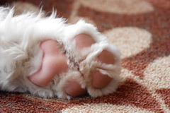 Closeup of sweet puppy paw stock images