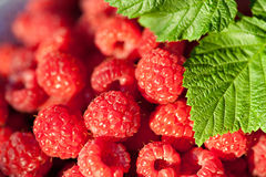 Closeup Sweet Raspberries Royalty Free Stock Images