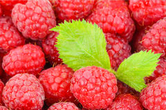 Closeup of Sweet raspberry with leafs Stock Image