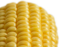 Closeup  sweetcorn cob on white Royalty Free Stock Images